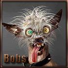 avatar_bobs66
